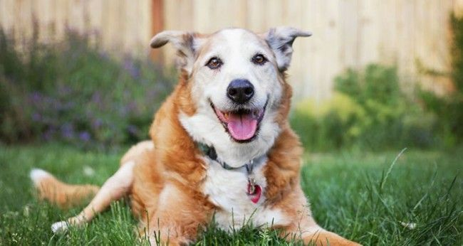 7-of-the-healthiest-dog-breeds-main-photo