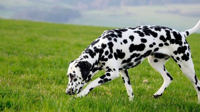 8 Budget Friendly Dog Breeds In India