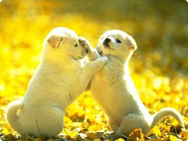 105207-dogs-so-cute
