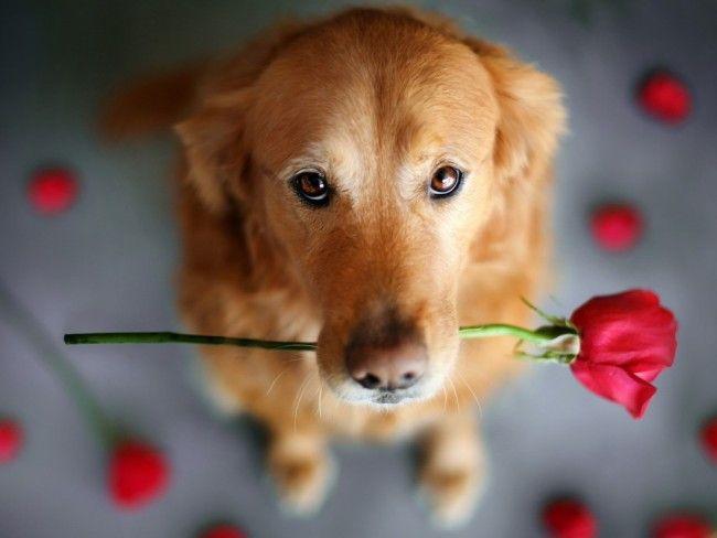 Cute-Dog-dogs-33698322-1024-768
