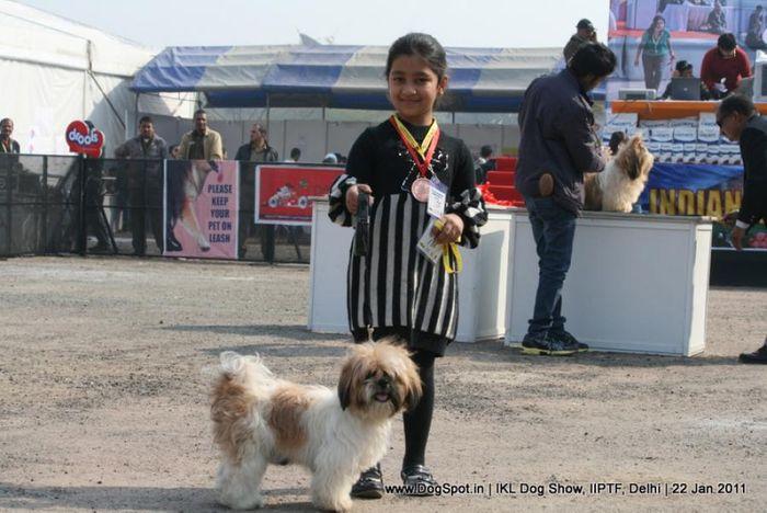 All Breed Championship Dog Show,Shih-Tzu,Shih Tzu, image