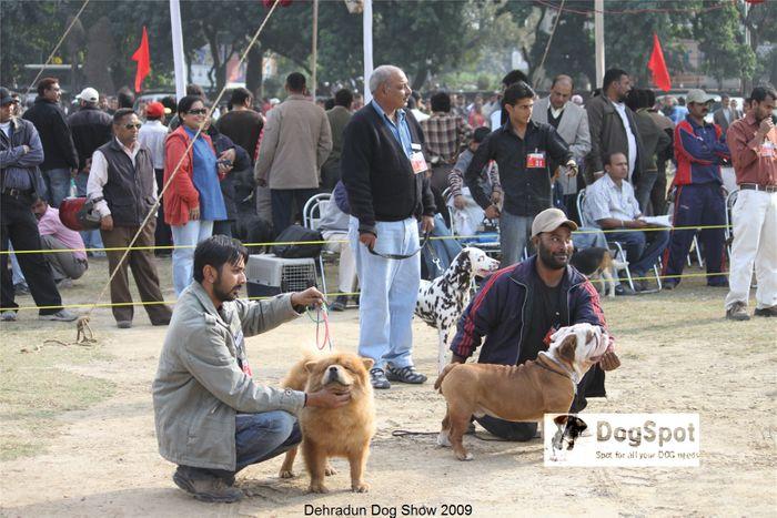Bulldog,Dalmatian,Group Judging,Shar Pei,Utility Group, image