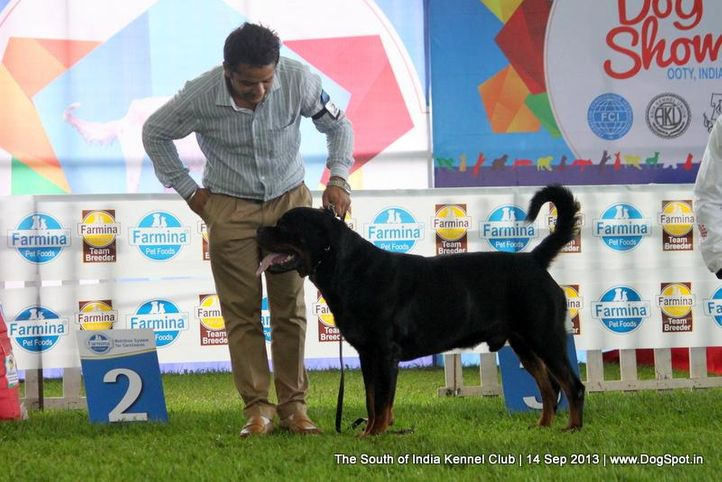 rottweiler,sw-90,, 112th & 113th Ooty Dog Show, DogSpot.in