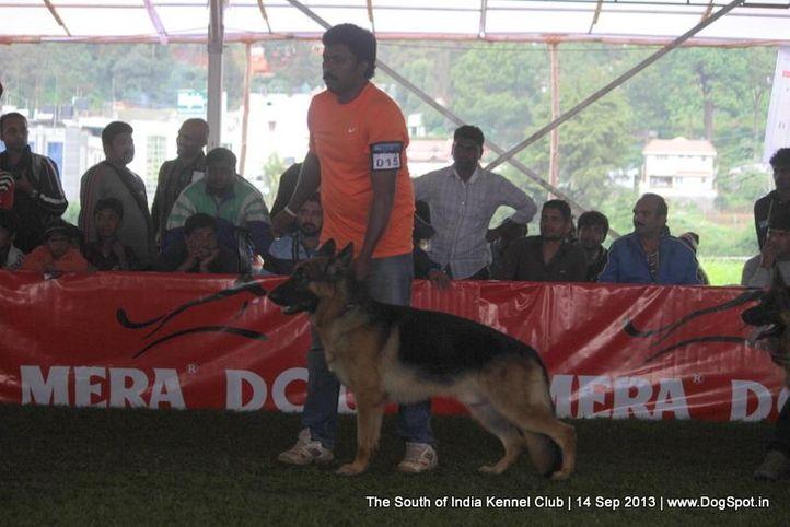 ex-15,german shepherd,sw-90,, NICKSON, German Shepherd Dog, DogSpot.in