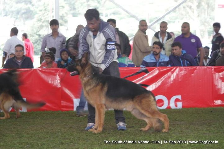 ex-50,german shepherd,sw-90,, 112th & 113th Ooty Dog Show, DogSpot.in