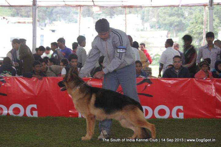 ex-45,german shepherd,sw-90,, KING USTINOV V. D YBAJO HOEVE, German Shepherd Dog, DogSpot.in