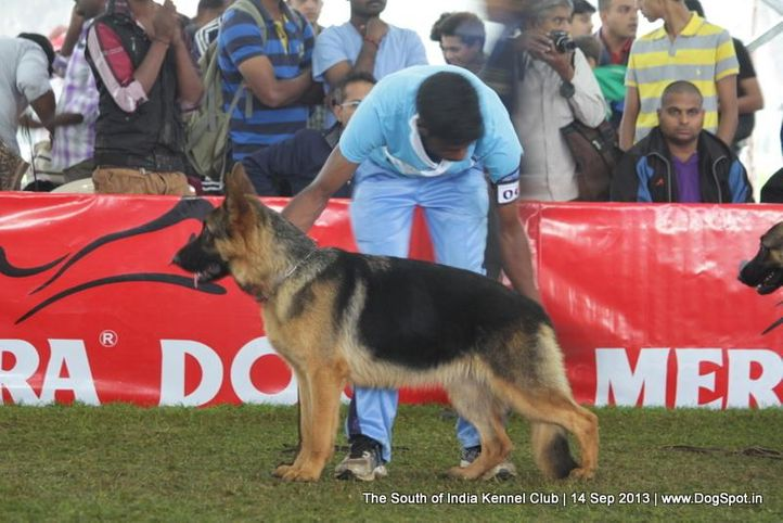 german shepherd,sw-90,, 112th & 113th Ooty Dog Show, DogSpot.in