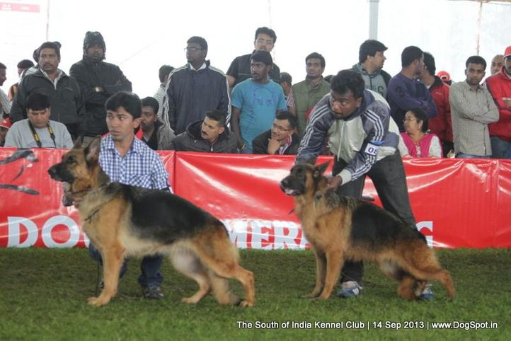 german shepherd,sw-90,, 112th & 113th Ooty Dog Show, DogSpot.in