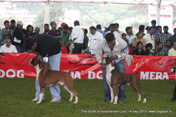boxer,sw-90,, 112th & 113th Ooty Dog Show, DogSpot.in