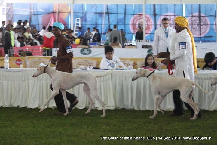 ex-658,mudhol hound,sw-90,, 112th & 113th Ooty Dog Show, DogSpot.in