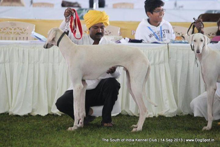 ex-659,mudhol hound,sw-90,, 112th & 113th Ooty Dog Show, DogSpot.in