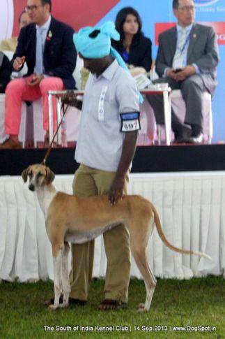 ex-697,mudhol hound,sw-90,, 112th & 113th Ooty Dog Show, DogSpot.in