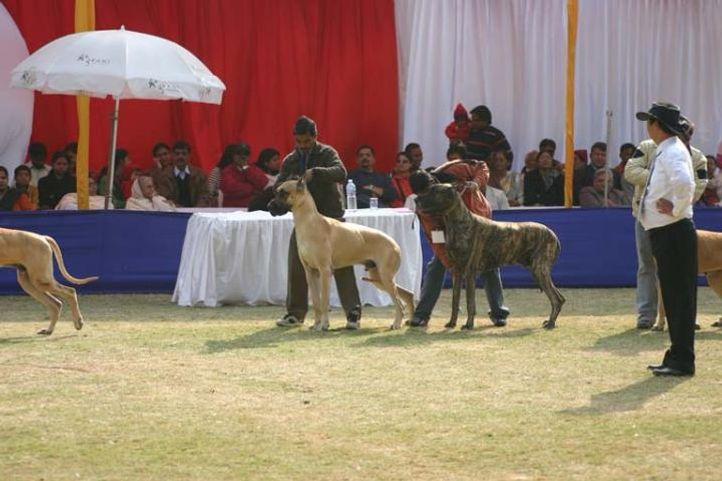 Agra Dog Show, Taj Kennel Club, Agra Dog Show- 3 Feb 2008, DogSpot.in