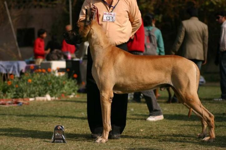 Agra Dog Show, Taj Kennel Club, Agra Dog Show- 3 Feb 2008, DogSpot.in