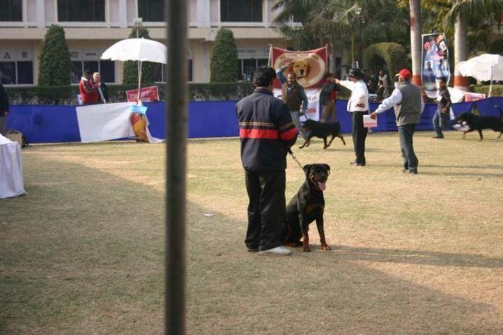 Agra 2008, Agra Dog Show- 3 Feb 2008, DogSpot.in