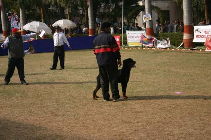 Agra 2008, Agra Dog Show- 3 Feb 2008, DogSpot.in