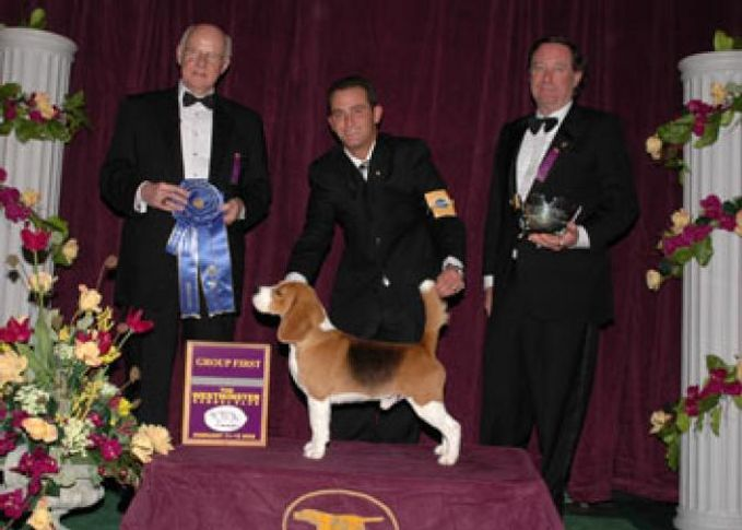 Hound, 1st Best In group (Hounds), DogSpot.in