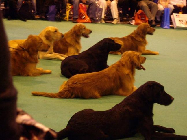 crufts 2008 , crufts 2008, DogSpot.in