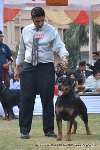 ex-133,rottweiler,sw-78,, GEHLAUT'S STORY OF SAKSHI, Rottweiler, DogSpot.in
