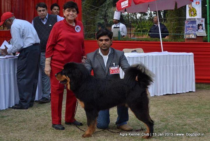 ex-153,sw-78,tibetan mastiff,, DREAM GIRL, Tibetan Mastiff, DogSpot.in