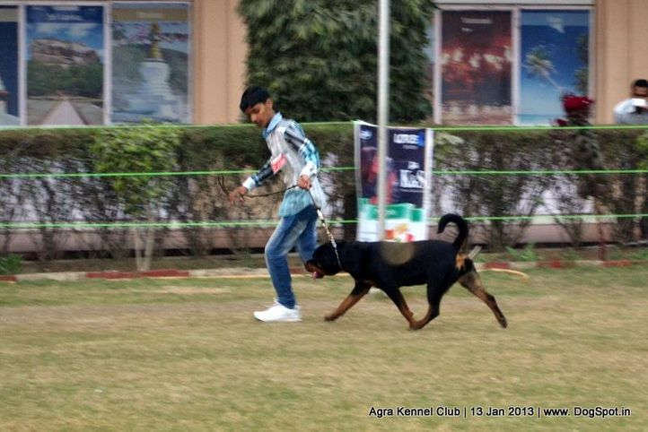 child handling,sw-78,, 2013 Agra Dog Show, DogSpot.in