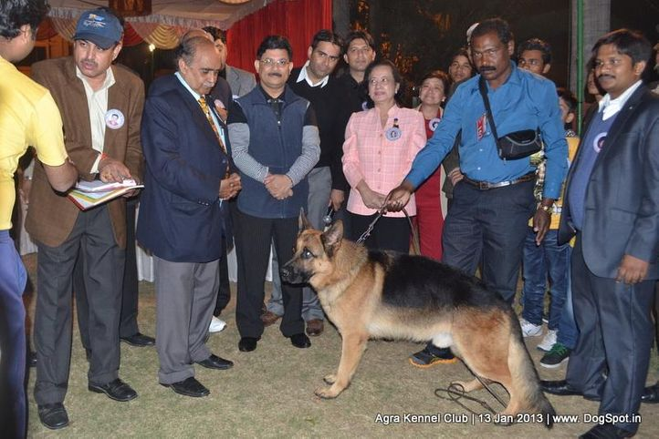 line up,sw-78,, 2013 Agra Dog Show, DogSpot.in
