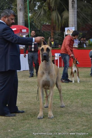 sw-78,, 2013 Agra Dog Show, DogSpot.in
