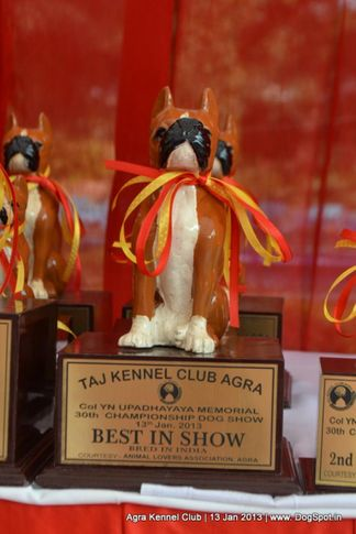 show trophy,sw-78,, 2013 Agra Dog Show, DogSpot.in