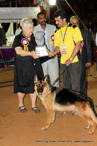 gsd,sw-11,ex-266,lineup,, CANDIE OF ANISHRI, German Shepherd Dog, DogSpot.in