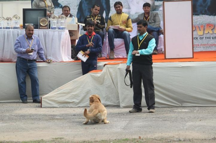 Dog Show,Obedience Show,, 4th IIPTF 2010, DogSpot.in