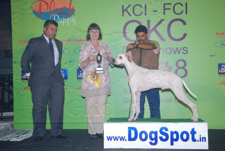 5FCILineUp,Day1,, 5th FCI Day 1 Line up 2008nship Dog Show 2008, DogSpot.in
