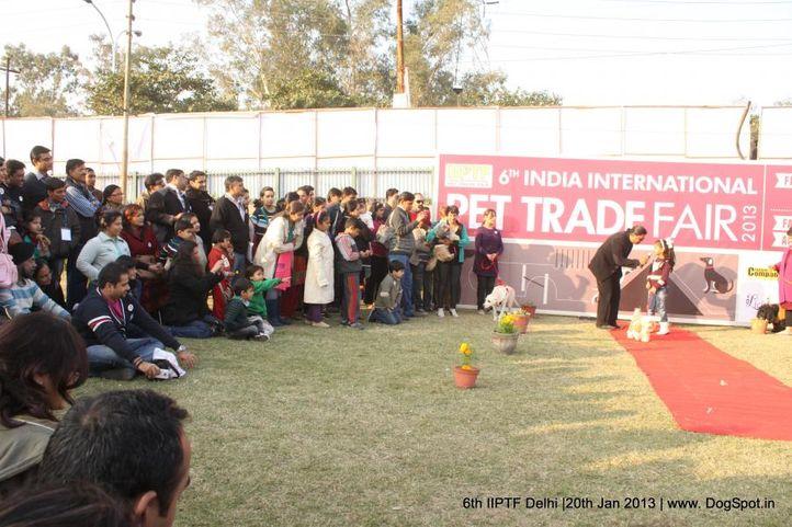 6th iiptf delhi,fashion show,, 6th IIPTF Delhi , DogSpot.in