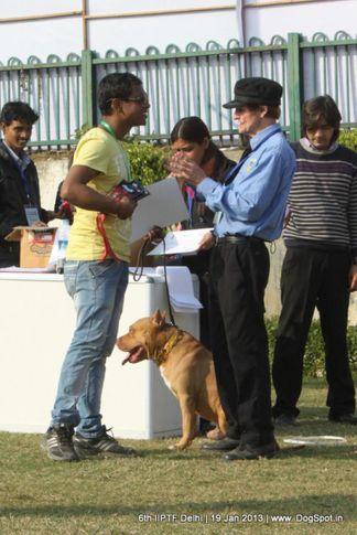 6th iiptf delhi,obedience show,, 6th IIPTF Delhi , DogSpot.in