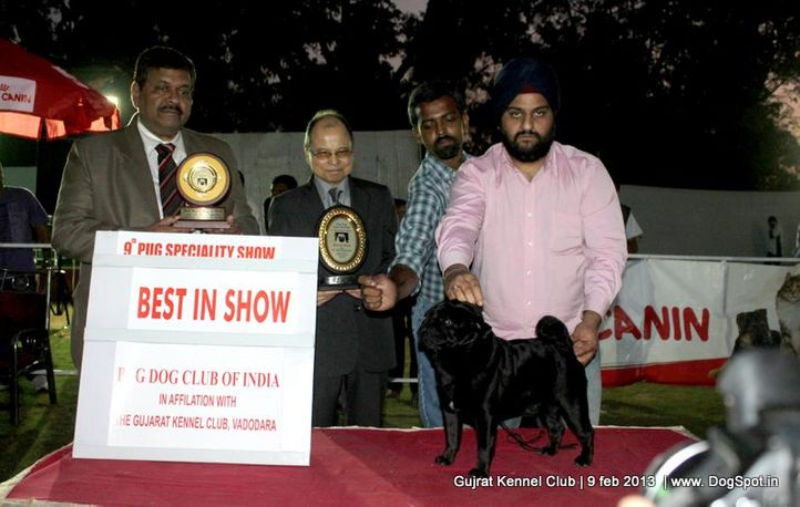9th pug speciality,ex-30,line up,pug,, 9th Pug Specialty Vadodara, DogSpot.in