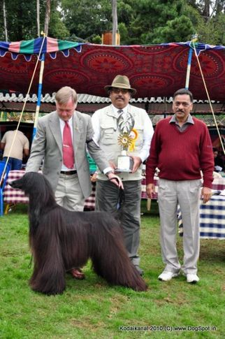 afghan hound,bis,lineup,, Afghan Hound Taking Line up, DogSpot.in