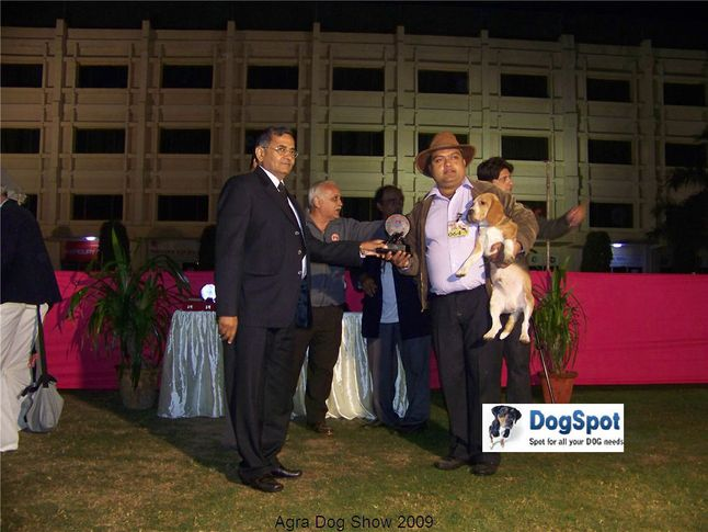 Best in show,BIS,Line up,, Agra Dog Show 2008-09, DogSpot.in