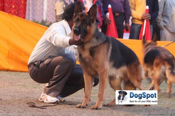 GSD,Zarno,, Agra Dog Show 2010, DogSpot.in