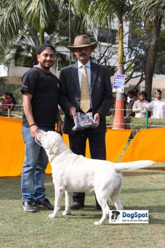 Chewos,Labrador,, Agra Dog Show 2010, DogSpot.in