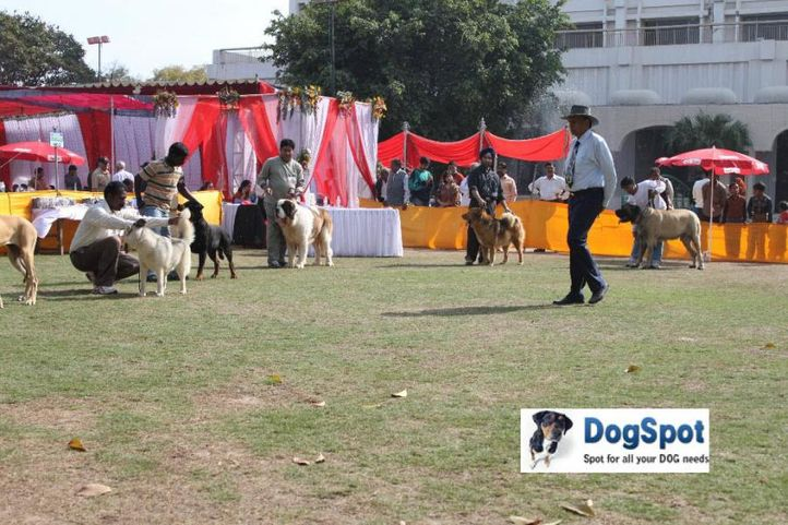 Group Judging,Working Group,, Agra Dog Show 2010, DogSpot.in