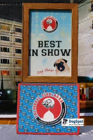 Stage,, Agra Dog Show 2010, DogSpot.in