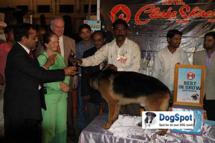 Lineup,Zarno,, Agra Dog Show 2010, DogSpot.in