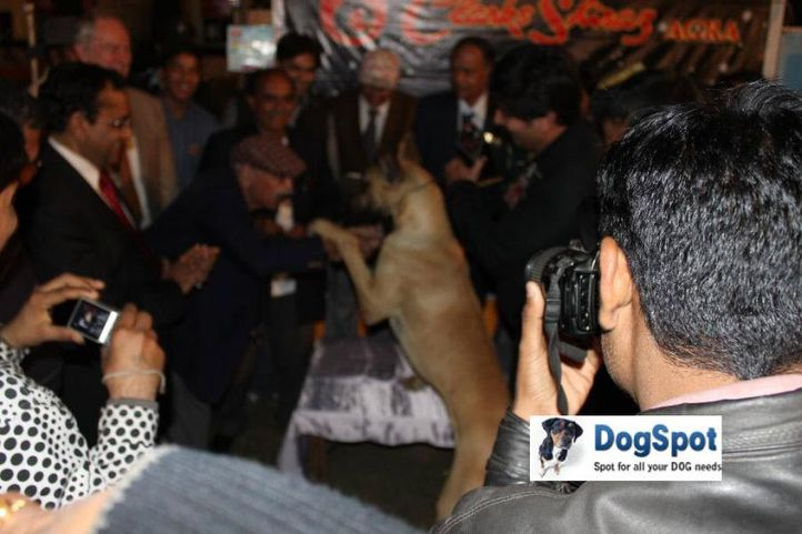 Highly Qualified,Lineup,, Agra Dog Show 2010, DogSpot.in