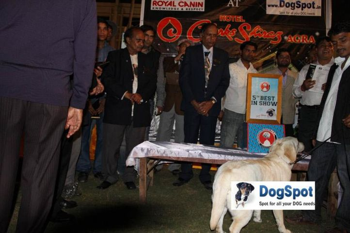 Baby of Sunnyland,Lineup,, Agra Dog Show 2010, DogSpot.in