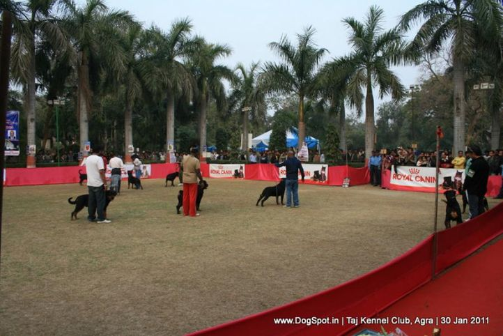 ground,sw-31,, Agra Dog Show 2011, DogSpot.in