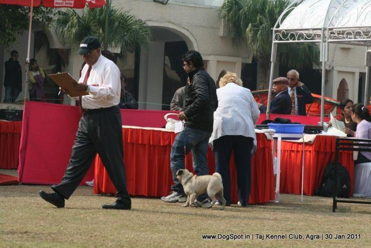 ring steward,sw-31,, Agra Dog Show 2011, DogSpot.in