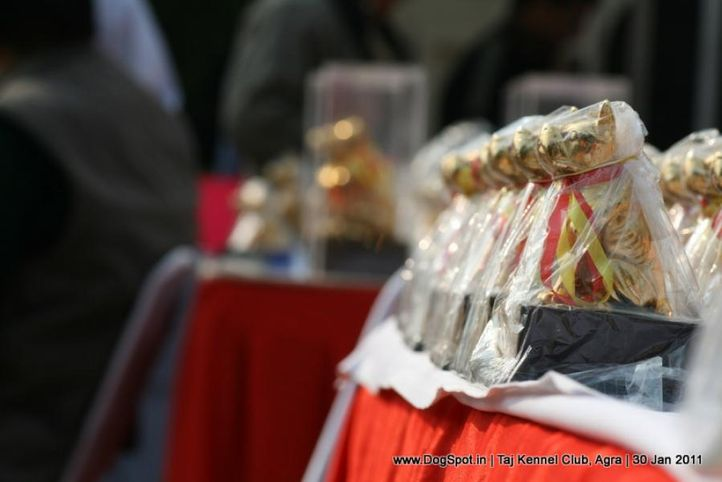 sw-31,trophies,, Agra Dog Show 2011, DogSpot.in