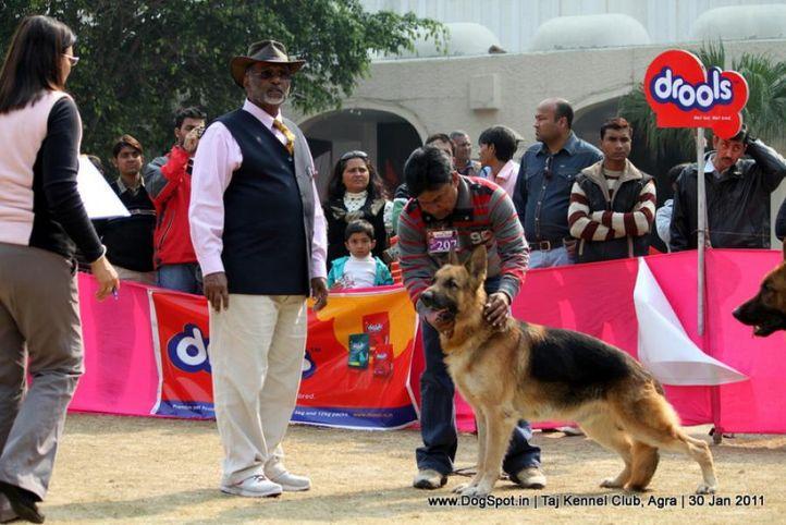 ex-207,gsd,sw-31,, BRUNO, German Shepherd Dog, DogSpot.in