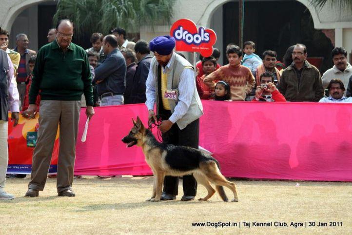ex-208,gsd,sw-31,, LAYAK'S EMILY, German Shepherd Dog, DogSpot.in
