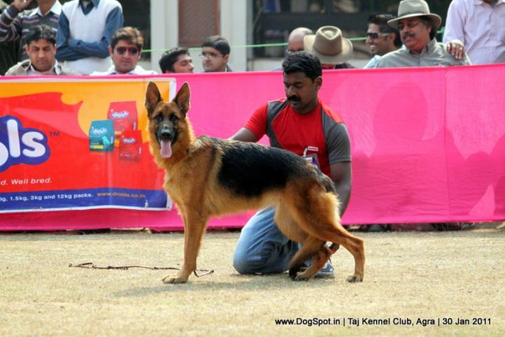 ex-220,gsd,sw-31,, SWAPNIL'S EMMY, German Shepherd Dog, DogSpot.in
