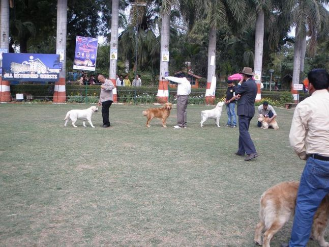 , Agra Show, DogSpot.in